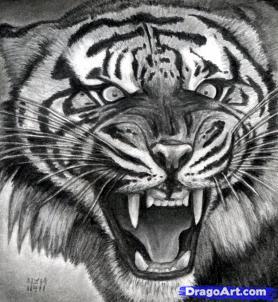 Учимся рисовать голову тигра с открытым ртом - шаг 18