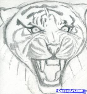 Учимся рисовать голову тигра с открытым ртом - шаг 5