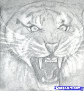 Учимся рисовать голову тигра с открытым ртом - шаг 8