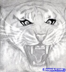 Учимся рисовать голову тигра с открытым ртом - шаг 9