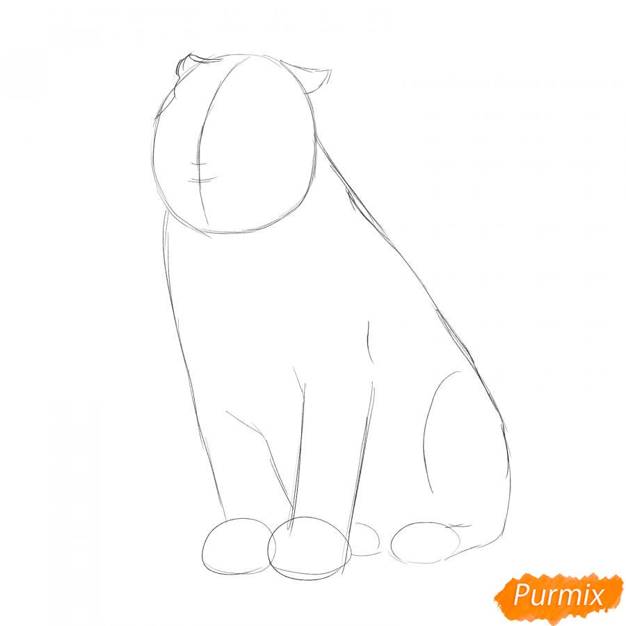 Рисуем амурского тигра сидящего - шаг 2