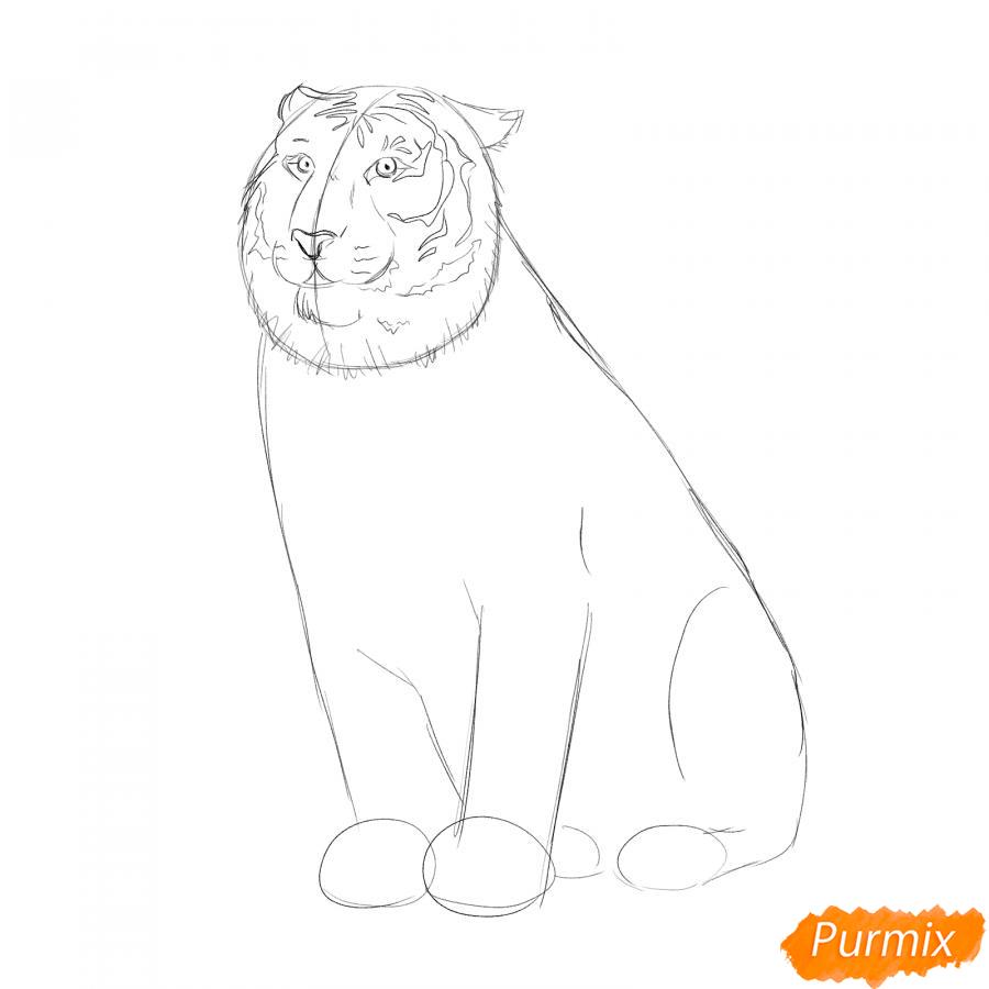 Рисуем амурского тигра сидящего - шаг 3
