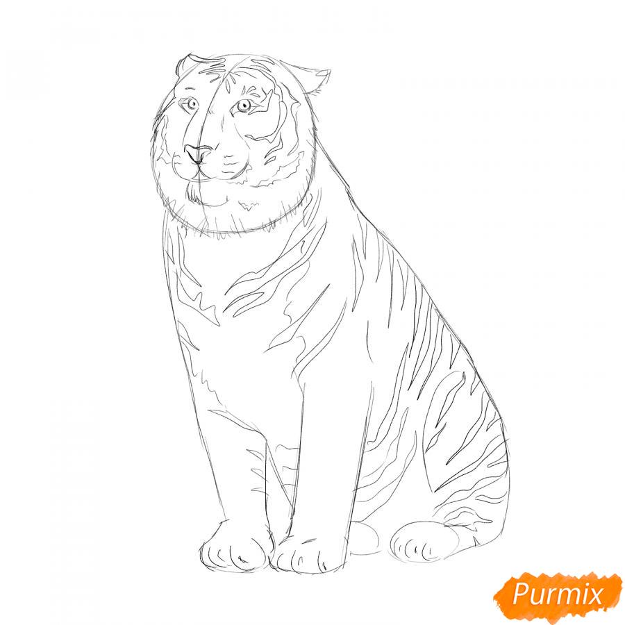 Рисуем амурского тигра сидящего - шаг 4