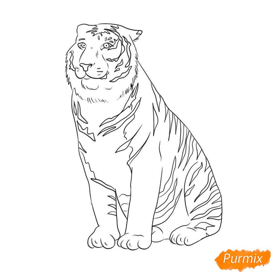 Рисуем амурского тигра сидящего - шаг 5