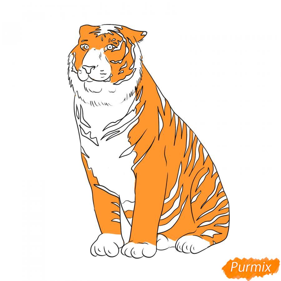 Рисуем амурского тигра сидящего - шаг 6