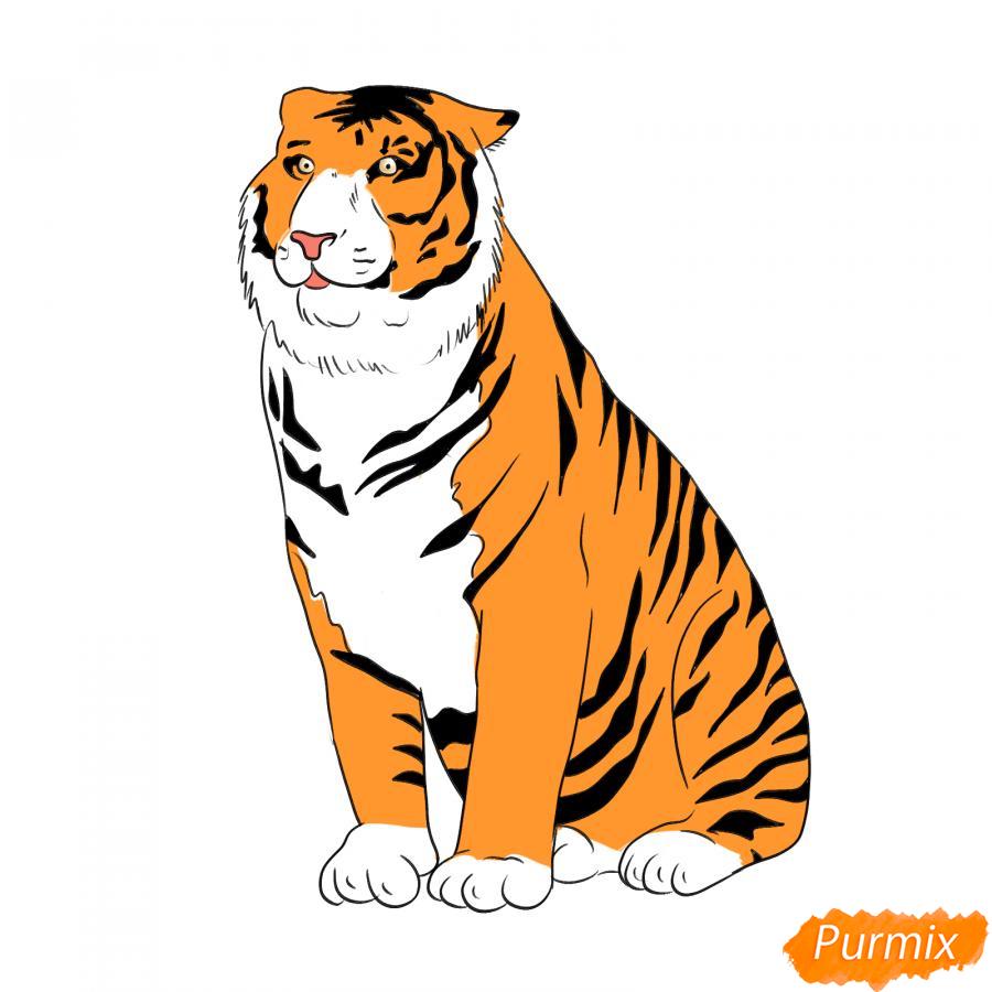Рисуем амурского тигра сидящего - шаг 7