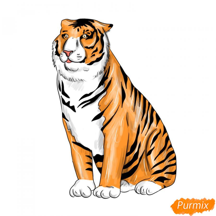 Рисуем амурского тигра сидящего - шаг 8