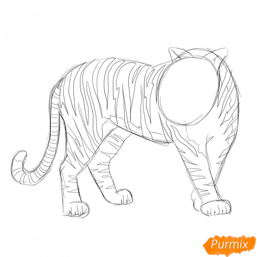 Рисуем амурского тигра в полный рост - шаг 4