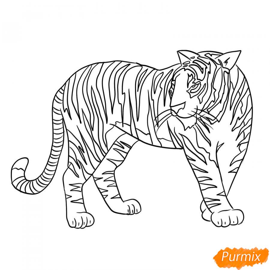 Рисуем амурского тигра в полный рост - шаг 6