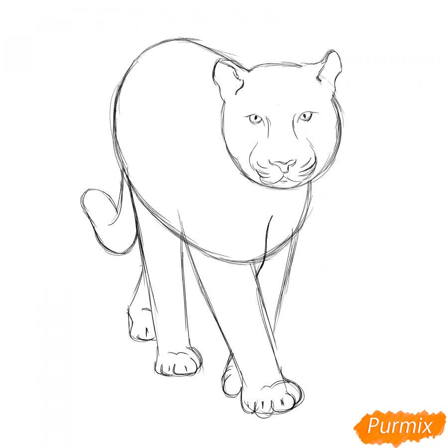 Рисуем белого тигра карандашами - шаг 3