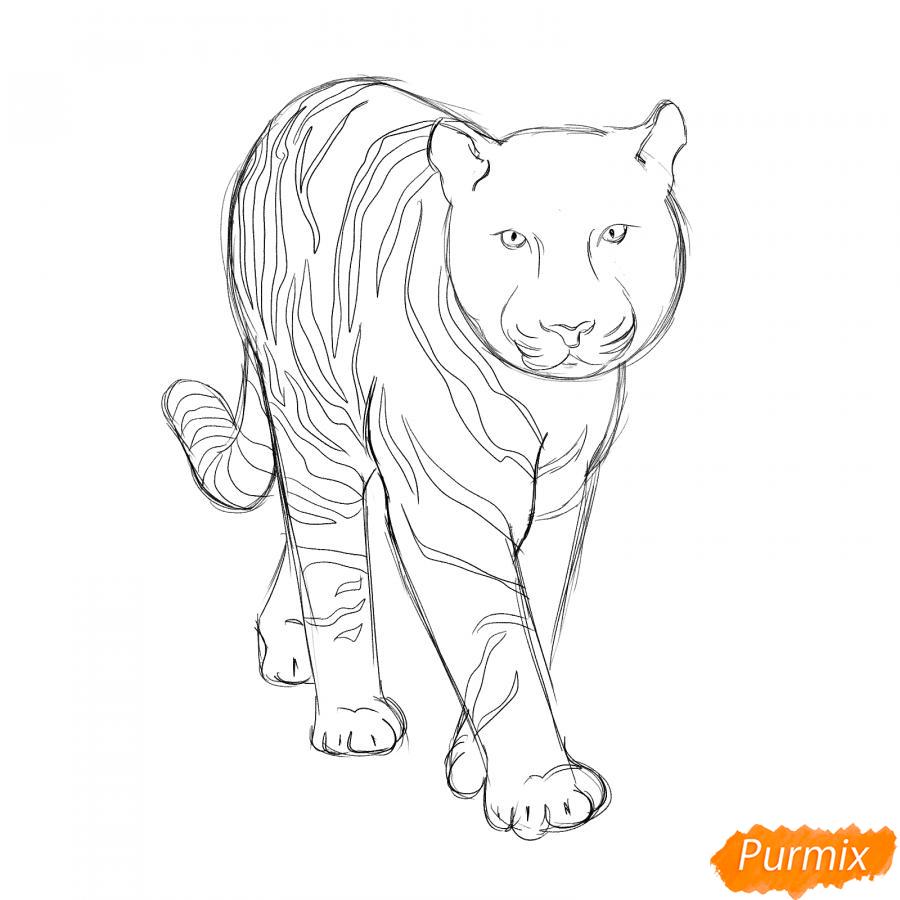 Рисуем белого тигра карандашами - шаг 4