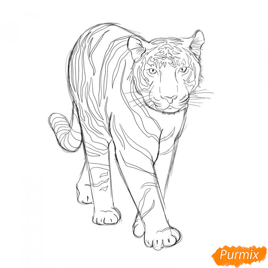 Рисуем белого тигра карандашами - шаг 5