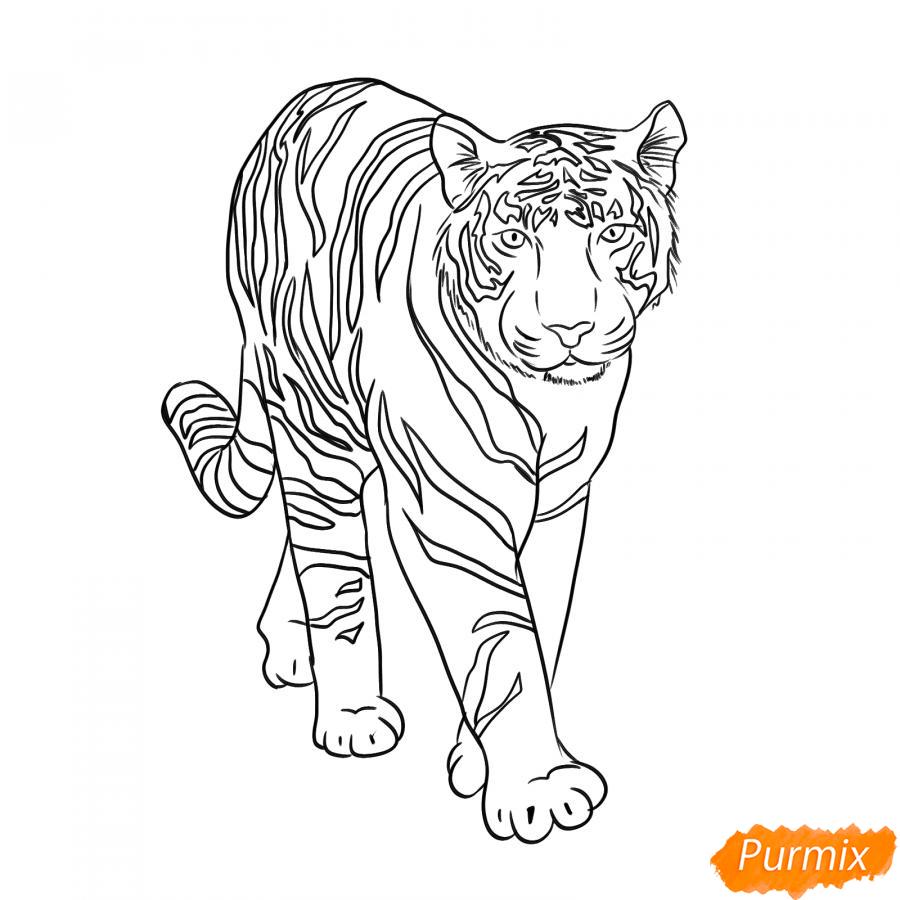 Рисуем белого тигра карандашами - шаг 6