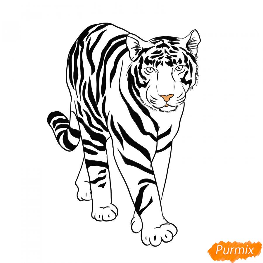 Рисуем белого тигра карандашами - шаг 7