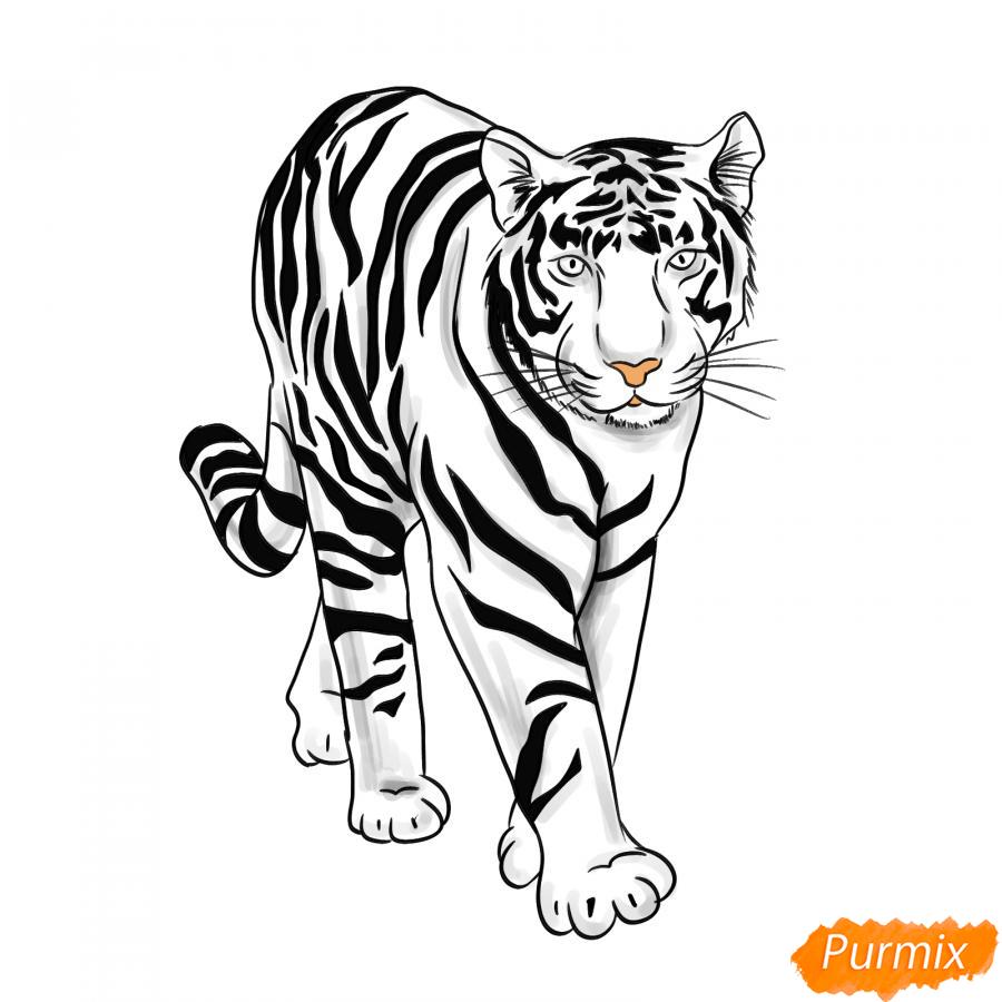 Рисуем белого тигра карандашами - шаг 8