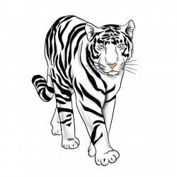 белого тигра