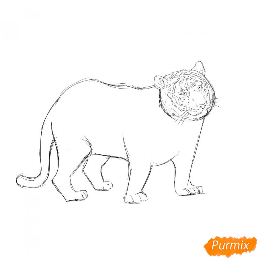 Рисуем черного тигра карандашами - шаг 5