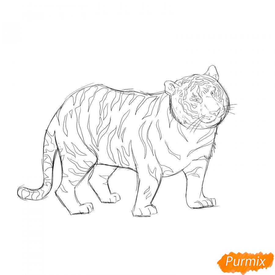 Рисуем черного тигра карандашами - шаг 6