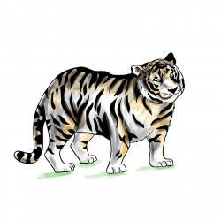 черного тигра
