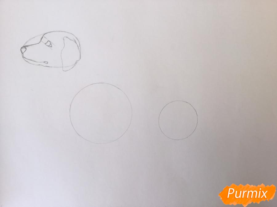 Рисуем Далматинца в полный рост - шаг 4