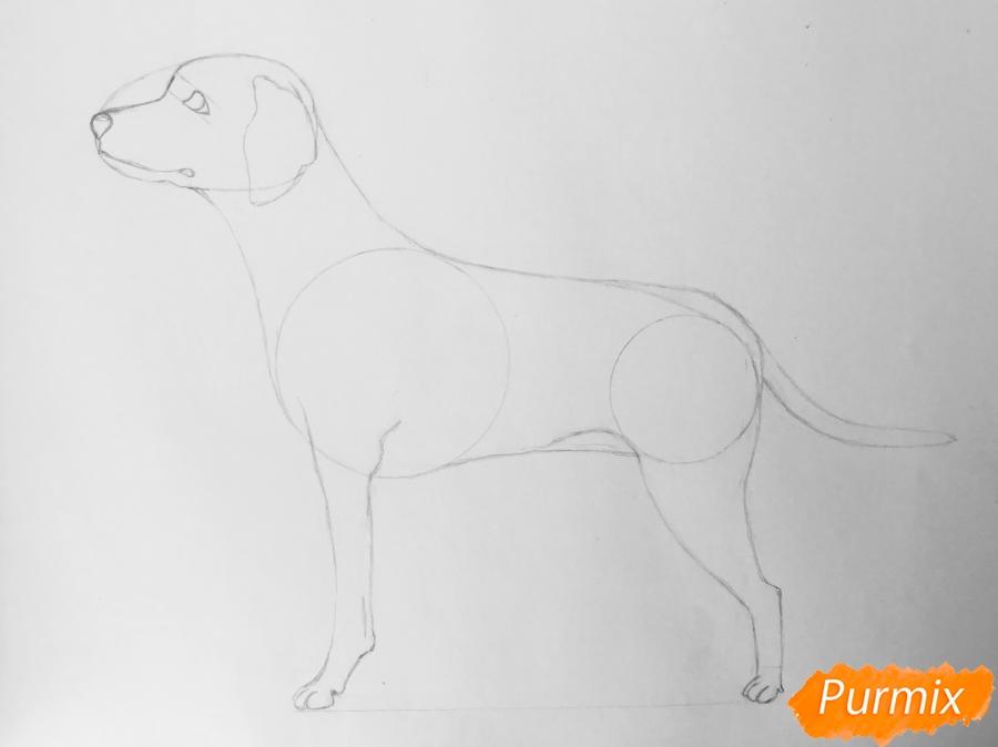 Рисуем Далматинца в полный рост - шаг 6
