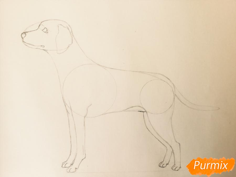 Рисуем Далматинца в полный рост - шаг 7