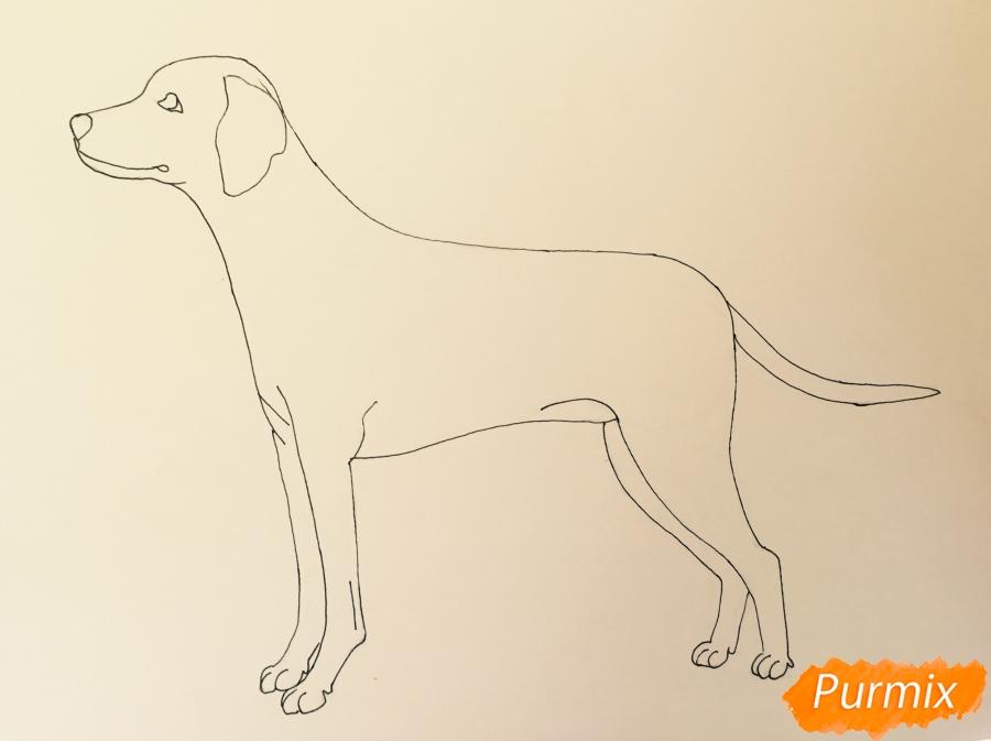 Рисуем Далматинца в полный рост - шаг 8