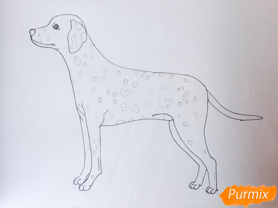 Рисуем Далматинца в полный рост - шаг 9