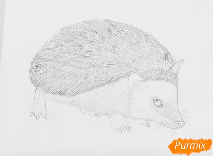 Рисуем ёжика на полянке цветными карандашами - шаг 6