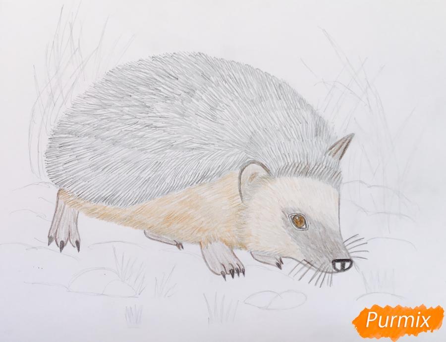 Рисуем ёжика на полянке цветными карандашами - шаг 8