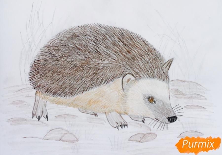 Рисуем ёжика на полянке цветными карандашами - шаг 9