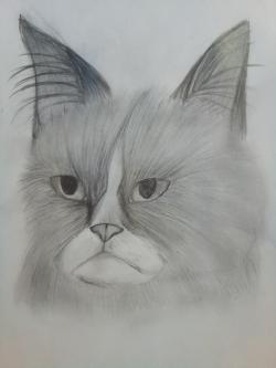 голову сердитого кота простым карандашом