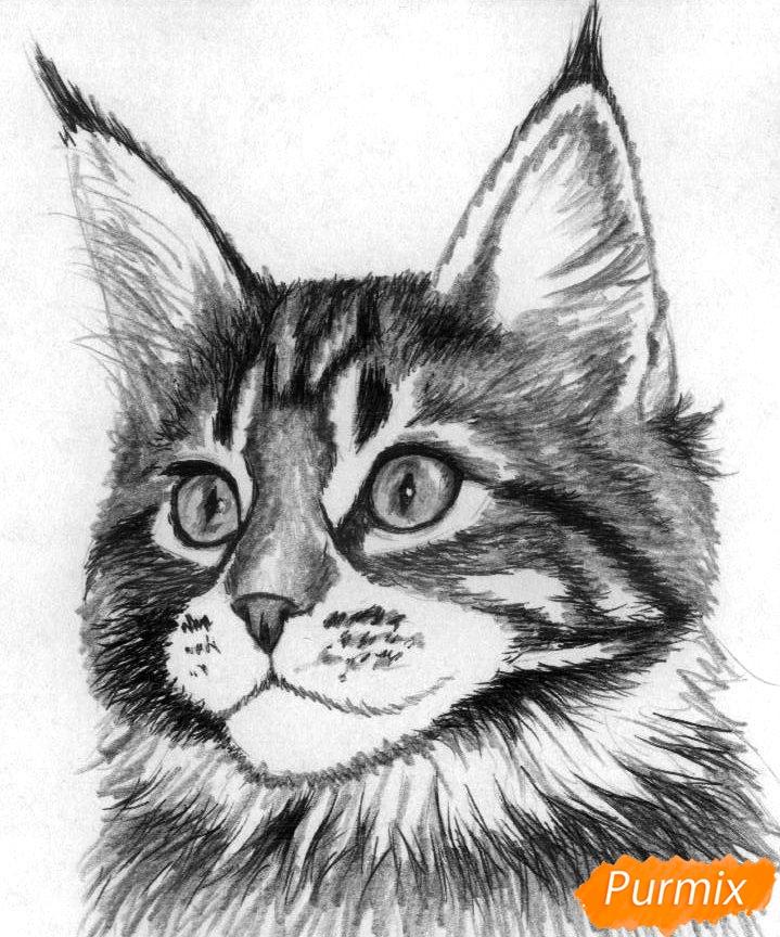 Рисуем кошку породы Мейн-кун - шаг 3