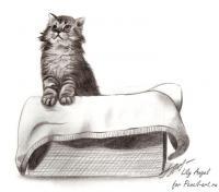 котенка в коробке карандашом