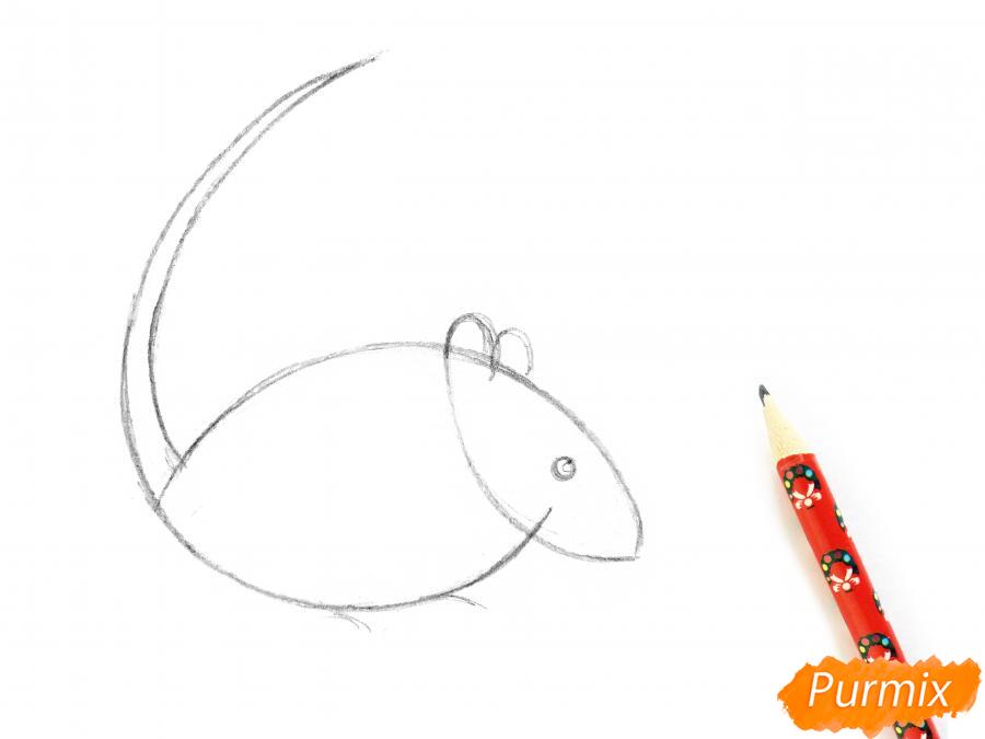 Рисуем крысу  или акварелью - шаг 3