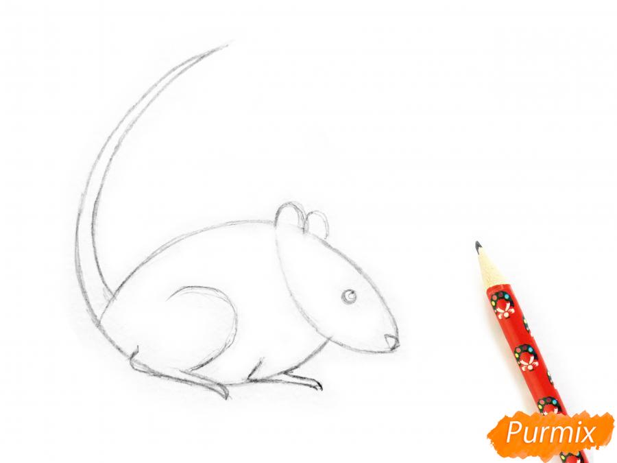 Рисуем крысу  или акварелью - шаг 4
