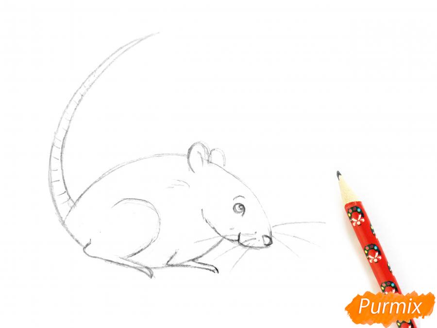 Рисуем крысу  или акварелью - шаг 5