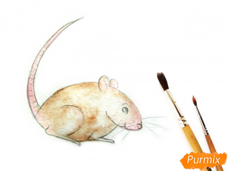 Рисуем крысу  или акварелью - шаг 6