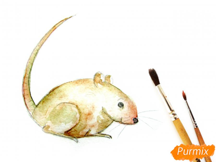 Рисуем крысу  или акварелью - шаг 7