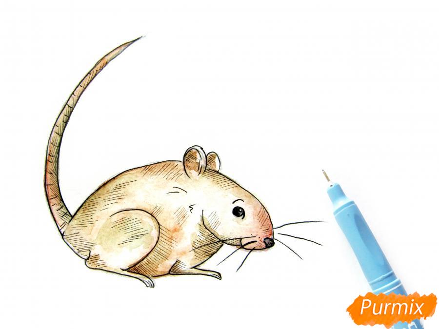 Рисуем крысу  или акварелью - шаг 8