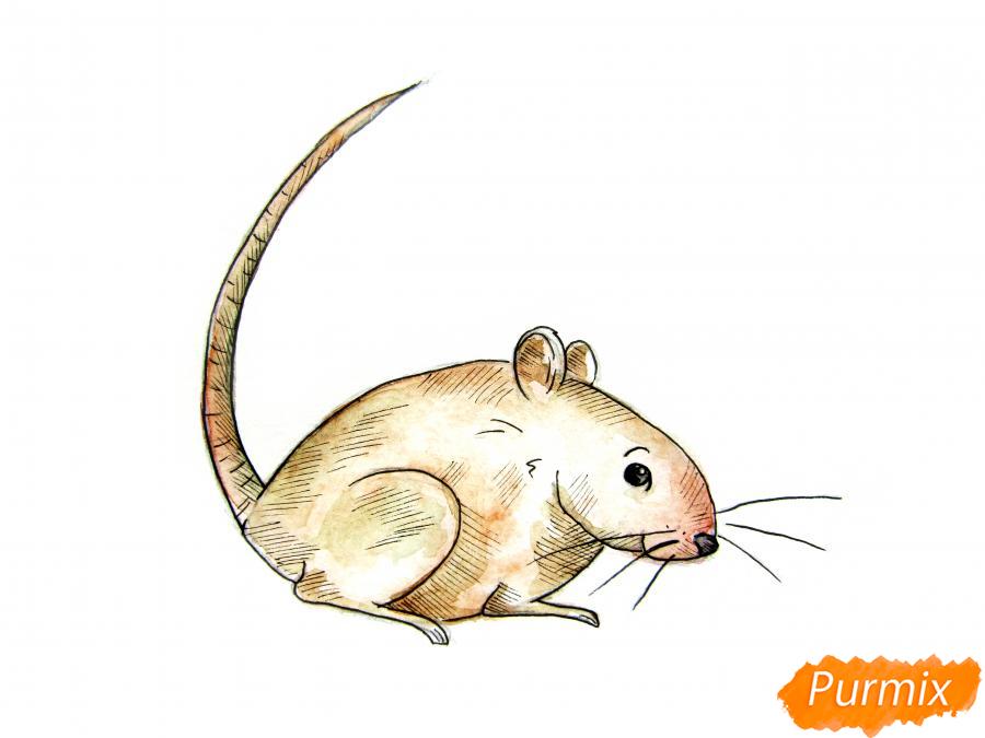 Рисуем крысу  или акварелью - шаг 9