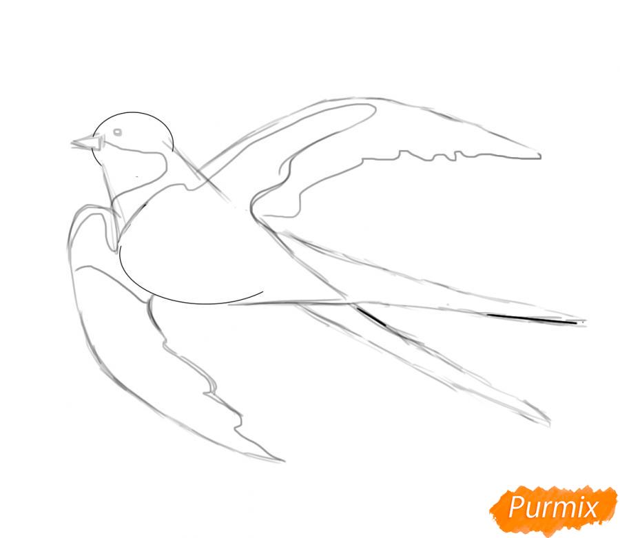 Рисуем Ласточку карандашами или акварелью - шаг 4