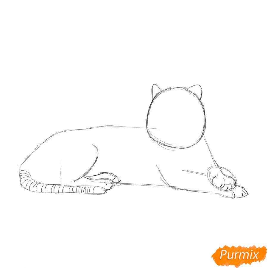 Рисуем лежащего амурского тигра - шаг 3