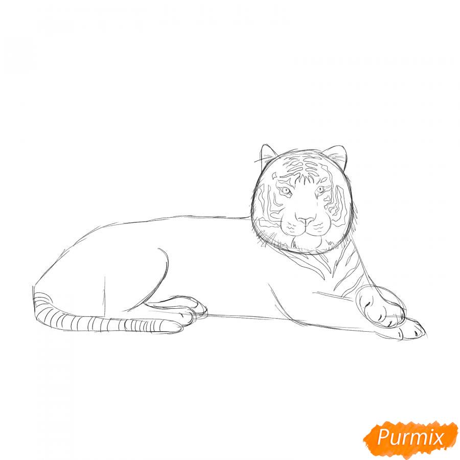 Рисуем лежащего амурского тигра - шаг 4