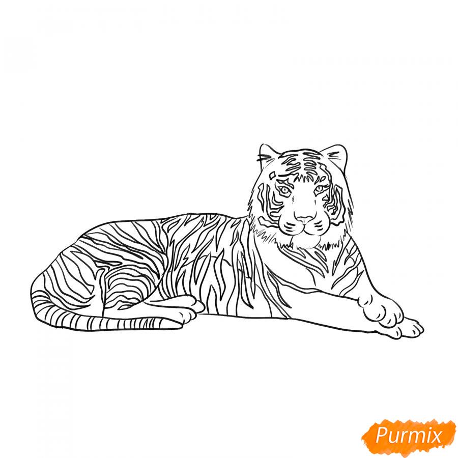 Рисуем лежащего амурского тигра - шаг 5