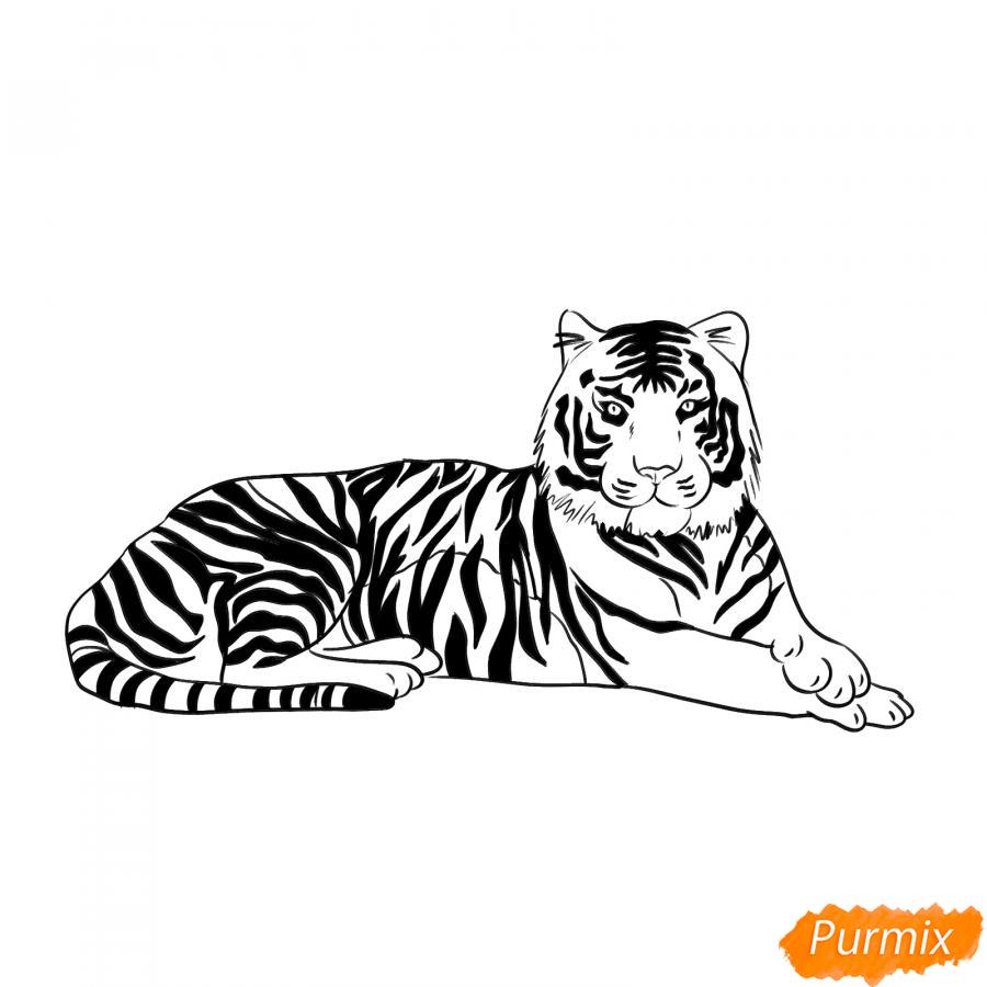 Рисуем лежащего амурского тигра - шаг 6