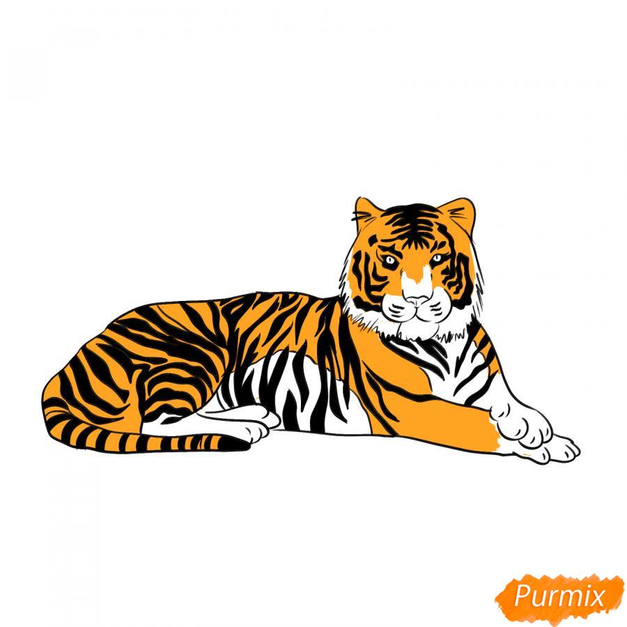Рисуем лежащего амурского тигра - шаг 7