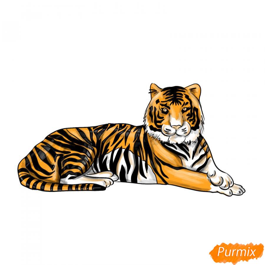 Рисуем лежащего амурского тигра - шаг 8