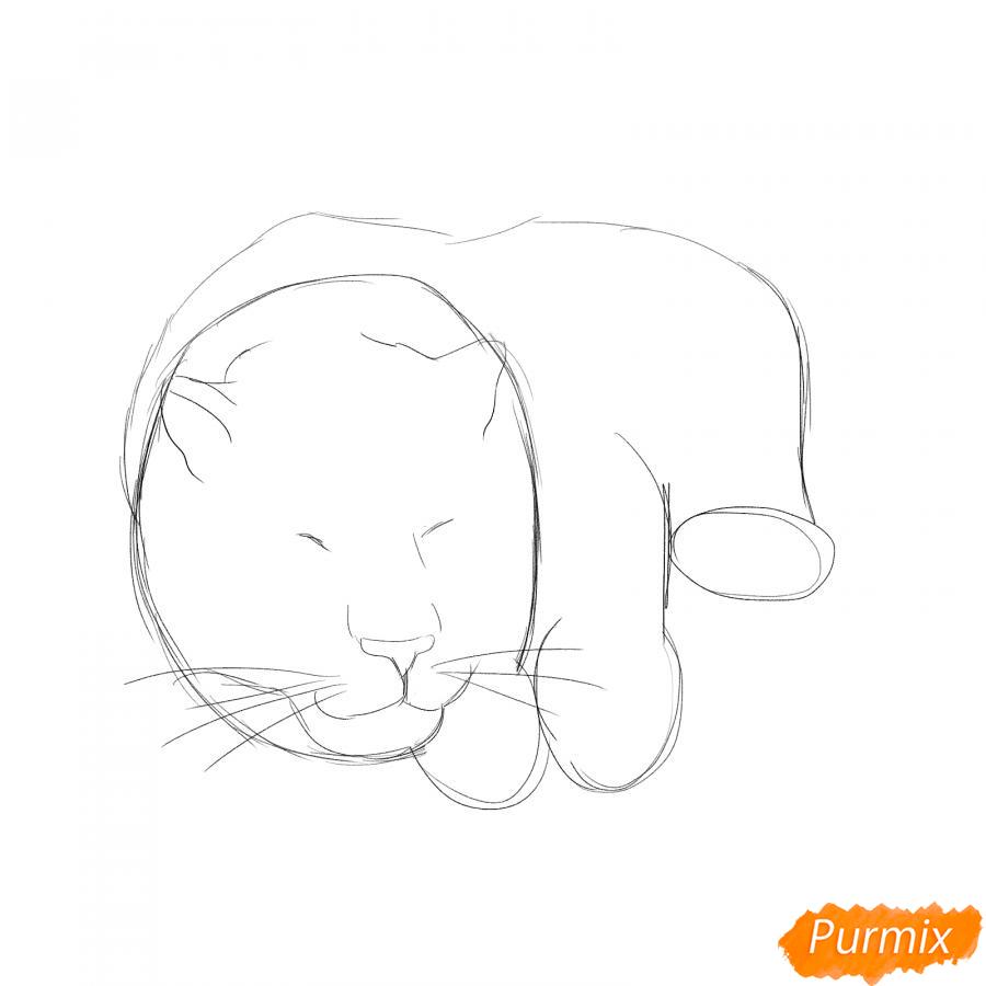 Рисуем лежащего белого тигра - шаг 2