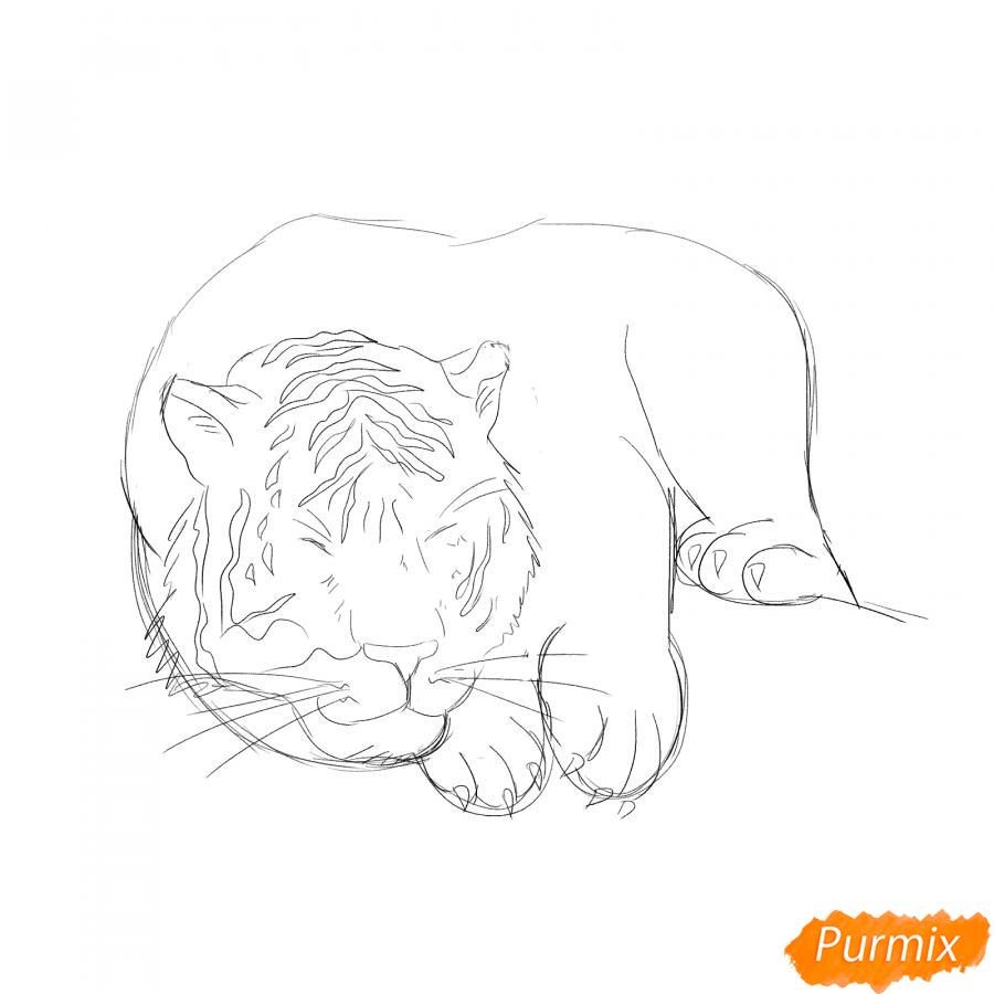 Рисуем лежащего белого тигра - шаг 3